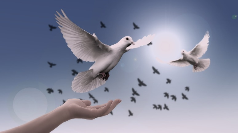 praying doves